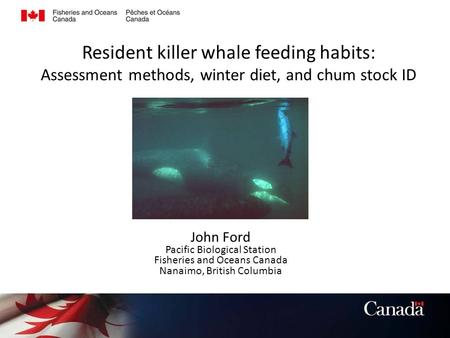 Resident killer whale feeding habits: Assessment methods, winter diet, and chum stock ID John Ford Pacific Biological Station Fisheries and Oceans Canada.