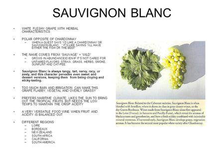 SAUVIGNON BLANC WHITE FLESHY GRAPE WITH HERBAL CHARACTERISTICS POLAR OPPOSITE OF CHARDONNAY –WHEN A GUEST SAYS ID LIKE A CHARDONNAY OR SAUVIGNON BLANC…