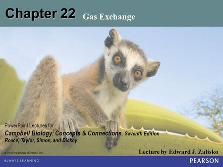 Chapter 22 Gas Exchange.