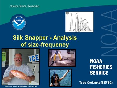 Silk Snapper - Analysis of size-frequency Todd Gedamke (SEFSC) Photo from: www.incognitolighttackle.com/photos.htm.