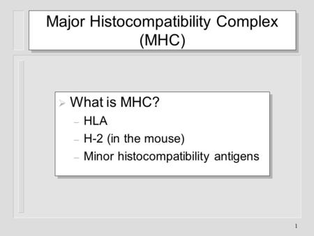 Major Histocompatibility Complex (MHC)
