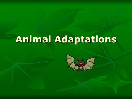 Animal Adaptations.