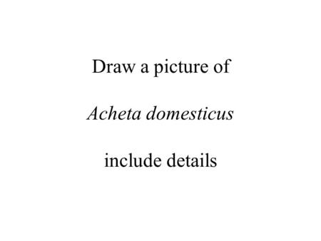 Draw a picture of Acheta domesticus include details.