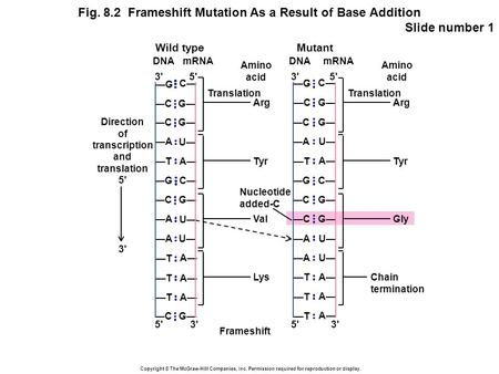 Copyright © The McGraw-Hill Companies, Inc. Permission required for reproduction or display. Fig. 8.2 Frameshift Mutation As a Result of Base Addition.