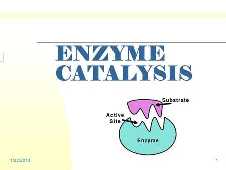 1/22/20141 ENZYME CATALYSIS. 1/22/20142 ENZYMES Globular Proteins Active Site One Substrate only Induced Fit: Changes occur when meet with substrate.