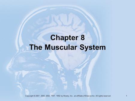 Chapter 8 The Muscular System