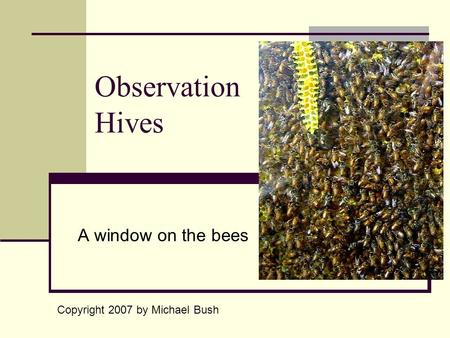 Observation Hives A window on the bees Copyright 2007 by Michael Bush.