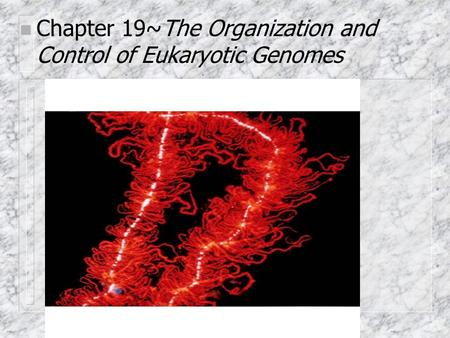 Chapter 19~The Organization and Control of Eukaryotic Genomes