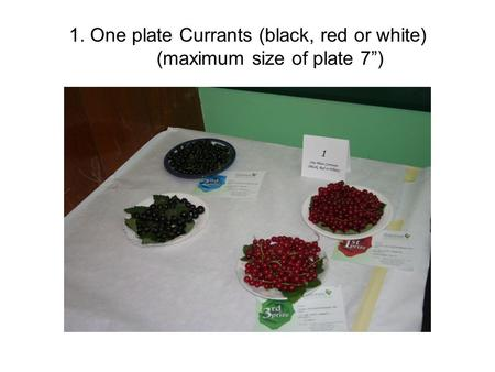 "1. One plate Currants (black, red or white) (maximum size of plate 7"")"