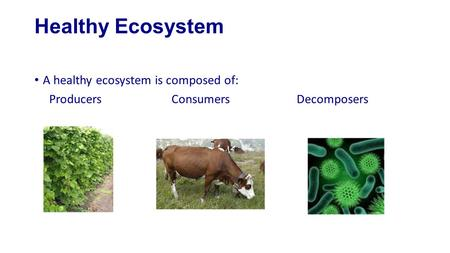 Healthy Ecosystem A healthy ecosystem is composed of: