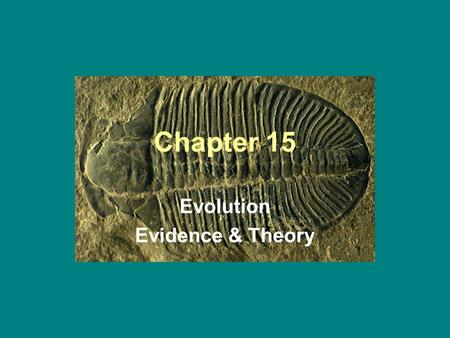 Chapter 15 Evolution Evidence & Theory. 15-1 The Fossil Record.