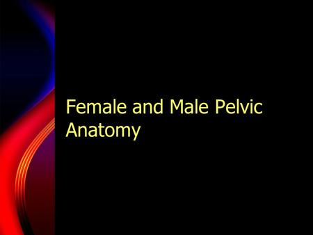 Female and Male Pelvic Anatomy