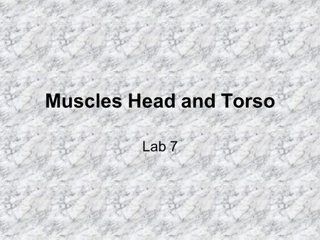 Muscles Head and Torso Lab 7.