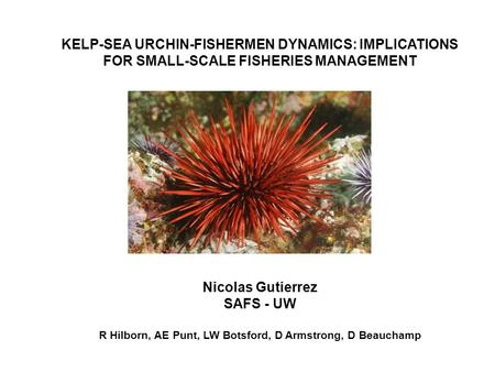 KELP-SEA URCHIN-FISHERMEN DYNAMICS: IMPLICATIONS FOR SMALL-SCALE FISHERIES MANAGEMENT Nicolas Gutierrez SAFS - UW R Hilborn, AE Punt, LW Botsford, D Armstrong,