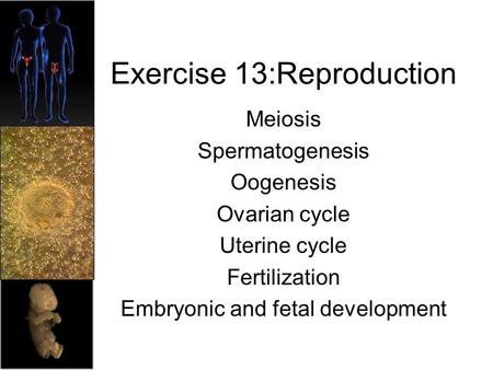Exercise 13:Reproduction