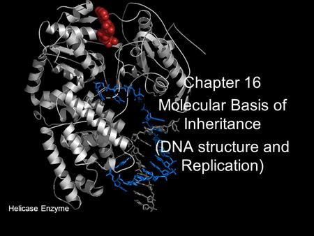 Chapter 16 Molecular Basis of Inheritance (DNA structure and Replication) Helicase Enzyme.