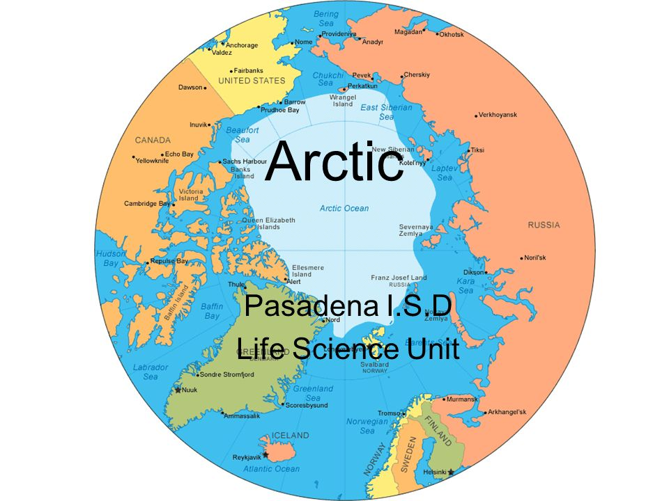 Arctic Pasadena I S D Life Science Unit Engage Interactions Between Living And Non Living Elements In Environment The Arctic Poppy Plant Grows Between Ppt Download