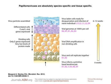 Papillomaviridae genome, Evaluarea imagistică în scleroza multiplă