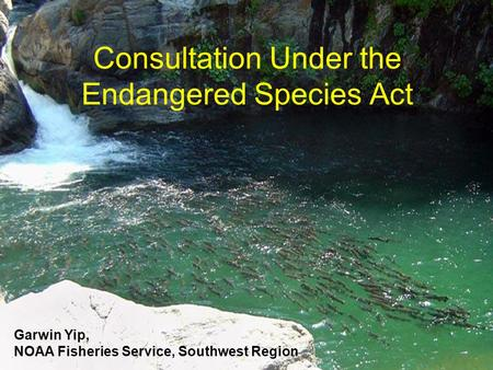 Consultation Under the Endangered Species Act Garwin Yip, NOAA Fisheries Service, Southwest Region.