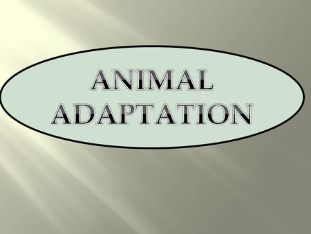 ANIMAL ADAPTATION.