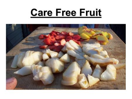 Care Free Fruit. What Is Care Free Fruit? Little to No Insect Damage Little to No Disease Damage Easy To Pick Little to No Spraying.