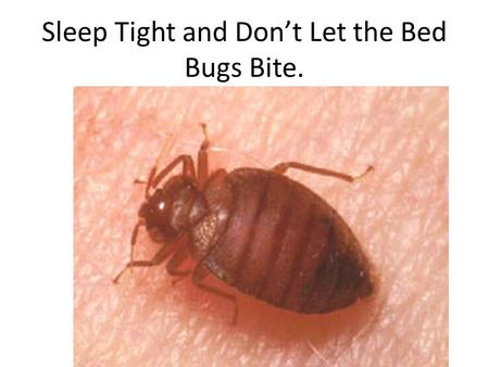 Sleep Tight and Don't Let the Bed Bugs Bite..