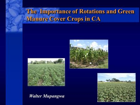 C I M M Y T MR International Maize and Wheat Improvement Center The Importance of Rotations and Green Manure Cover Crops in CA Walter Mupangwa.