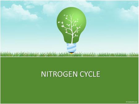 NITROGEN CYCLE. Nitro Composes about four-fifths (78.03 percent) by volume of the atmosphere an essential part of the amino acids. It is a basic element.