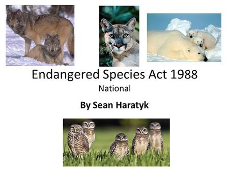 Endangered Species Act 19 88 National By Sean Haratyk.