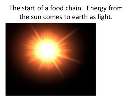 The start of a food chain. Energy from the sun comes to earth as light.