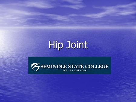 Hip Joint.