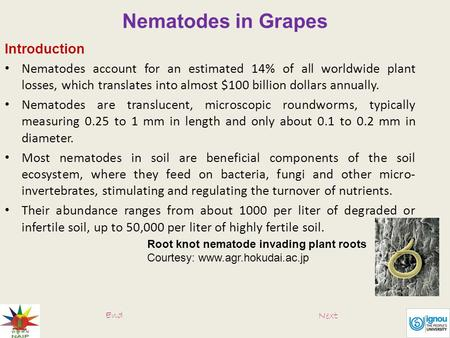 Nematodes in Grapes Introduction Nematodes account for an estimated 14% of all worldwide plant losses, which translates into almost $100 billion dollars.