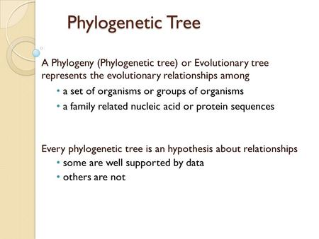 Phylogenetic Tree A Phylogeny (Phylogenetic tree) or Evolutionary tree represents the evolutionary relationships among a set of organisms or groups of.