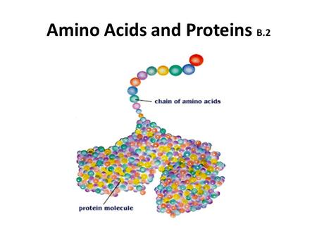 "Amino Acids and Proteins B.2. there are about 20 amino acids that occur naturally they are the basic ""building blocks"" of life/proteins."