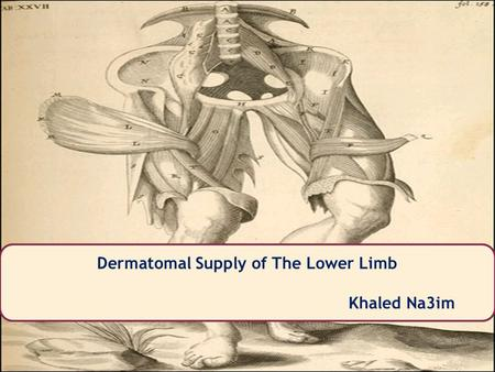 Khaled Na3im Dermatomal Supply of The Lower Limb Khaled Na3im.