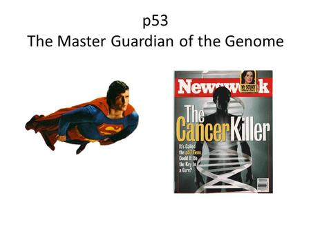 P53 The Master Guardian of the Genome. p53 gene mutations in human tumors Greenblatt et al. (1995) Cancer Res. 54:4855 50%