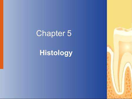 Chapter 5 Histology Copyright © 2004 by Delmar Learning, a division of Thomson Learning, Inc. ALL RIGHTS RESERVED.