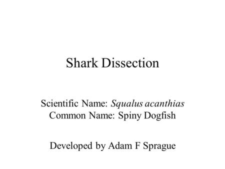 Shark Dissection Scientific Name: Squalus acanthias Common Name: Spiny Dogfish Developed by Adam F Sprague.