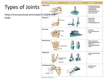 Types of Joints https://www.youtube.com/watch?v=QWRV4W ZrzDs.
