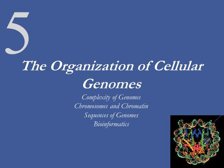 The Organization of Cellular Genomes Complexity of Genomes Chromosomes and Chromatin Sequences of Genomes Bioinformatics As we have discussed for the last.
