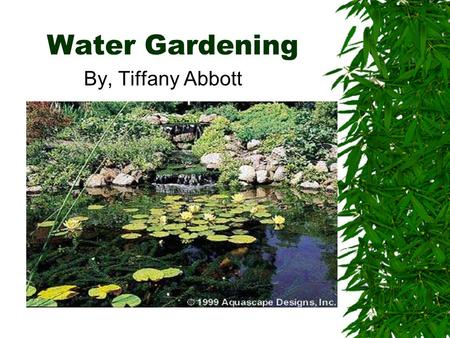Water Gardening By, Tiffany Abbott. What is Water Gardening?  New Area of Gardening  Can be used in residential, or public areas  Peaceful and relaxing.