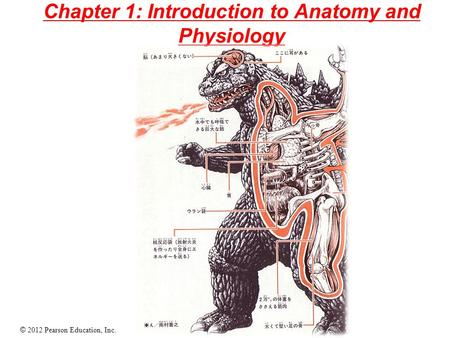 Chapter 1: Introduction to Anatomy and Physiology