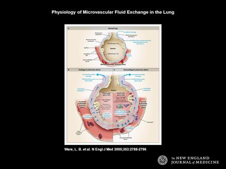 Ware, L. B. et al. N Engl J Med 2005;353:2788-2796 Physiology of Microvascular Fluid Exchange in the Lung.