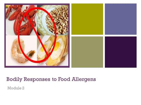 + Bodily Responses to Food Allergens Module 2. + Module Content  Definitions  Food allergy vs. food intolerances  Physiological responses to food allergens.