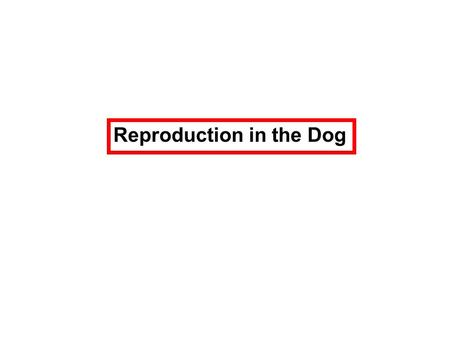 Reproduction in the Dog