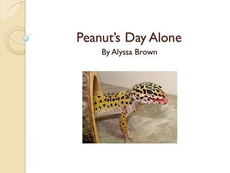 Peanut's Day Alone By Alyssa Brown. Today, Peanut, the gecko, was spending her first day alone. Her owner was going to school. Peanut was very nervous.