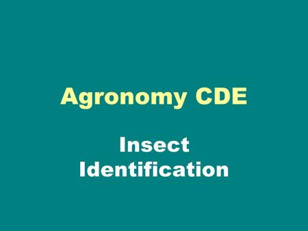 Agronomy CDE Insect Identification. Choose the correct answer A. Flea Beetle B. Spider mite C. Aphid D. Lygus Click to see correct answer.