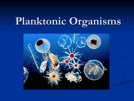 Planktonic Organisms. Introduction Plankton = Organisms that drift in the water Plankton = Organisms that drift in the water Cannot move against the current.