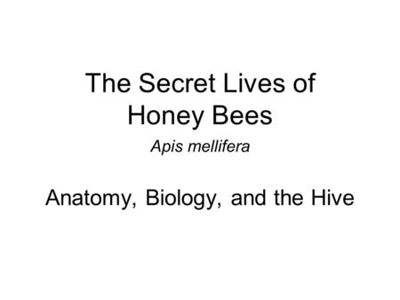 The Secret Lives of Honey Bees Apis mellifera Anatomy, Biology, and the Hive.