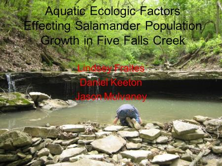 Aquatic Ecologic Factors Effecting Salamander Population Growth in Five Falls Creek Lindsey Fraites Daniel Keeton Jason Mulvaney.